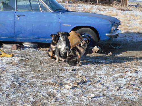Days are very numbered for these pups.  Can you help?