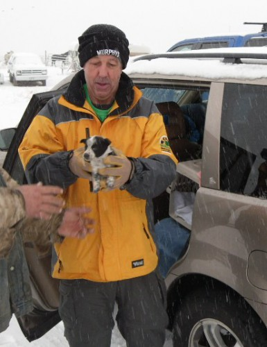 A Princeton, Oregon Puppy, so young to be feral in the snowy desert