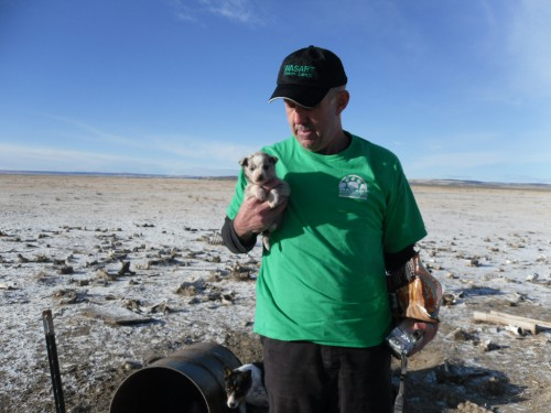 A Princeton, Oregon Puppy with beef carcass food littered in the snowy desert