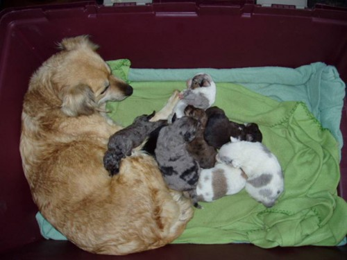 Project Pooch Rescued Family